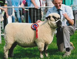 Westmorland County Show 2015