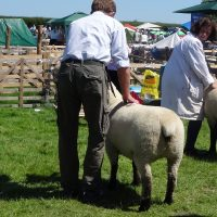North Yorkshire Show 2017